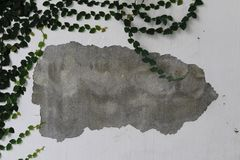 Green ivy climb on worn wall as background. Green ivy climb on worn wall gray border and white background stock photos