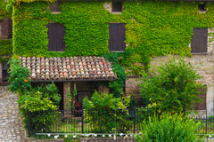 Green ivy covers historic brick home. In Italy Stock Photography