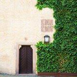 Green Ivy covers side of weathered barn background with old door Stock Photo