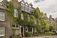 Green ivy facade. Typical english house with beautiful ivy facade Royalty Free Stock Photos