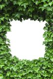 Green Ivy leaves frame Stock Images