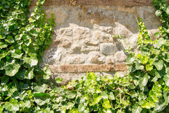 Green ivy leaves on a rocky wall, texture Stock Images