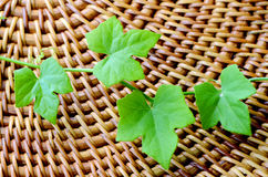 Green ivy leaves on wood background. Royalty Free Stock Image