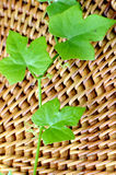 Green ivy leaves on wood background. Stock Photography