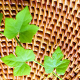 Green ivy leaves on wood background. Stock Images