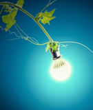 Green ivy and light bulb Royalty Free Stock Photos