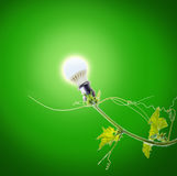 Green ivy and light bulb Royalty Free Stock Image