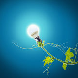 Green ivy and light bulb Stock Photography