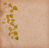 Green ivy on old grunge antique paper Royalty Free Stock Image