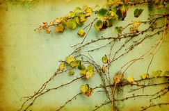 Green ivy on old grunge paper texture Stock Photography