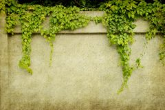 Green ivy on old grunge paper texture Stock Photo