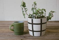 Ivy Plant and Green Vintage Coffee Cup royalty free stock images