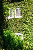 Green ivy surrounding the wall Stock Images