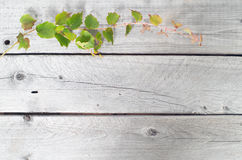 Green ivy vine against wooden background Royalty Free Stock Photos