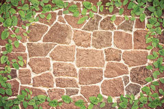 Green Ivy on the wall. Border of Green Ivy on the wall stock photos