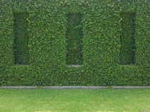 Green ivy on wall with grass Royalty Free Stock Image