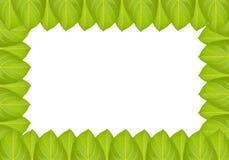 Green jackfruit leaf Royalty Free Stock Photo