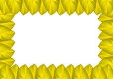 Green jackfruit leaf Stock Photo