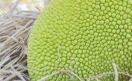 Green jackfruit on straw Stock Photography