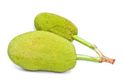 The green jackfruits. Royalty Free Stock Photo
