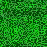 Green jaguar spotted background. Stock Photography
