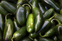 Green Jalapeno Chili Peppers Royalty Free Stock Photography