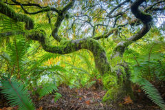 Green japanese maple tree. Amazing Green Japanese Maple Tree in autumn, Seatle Royalty Free Stock Photos