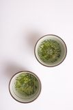 Green japanese tea cups royalty free stock photography