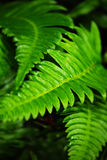 GREEN JOY. Green fern leaves in the forest stock images