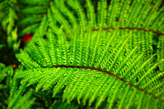 GREEN JOY FERNS. In the forest, wet Royalty Free Stock Photo