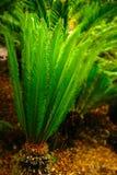 GREEN JOY PALM Royalty Free Stock Image