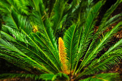 GREEN JOY. Green palm in the forest stock photography