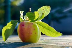 Green juicy apple with leaves with on wooden aged texture background close up. Apple in sunlight on blurred nature background Royalty Free Stock Images