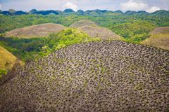 Green juicy and colorful Chocolate Hills in Bohol Stock Photography