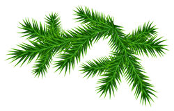 Green juicy one pine branch Stock Photography