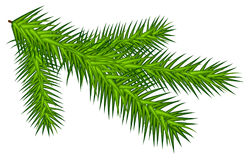 Green juicy one spruce branch Stock Photo