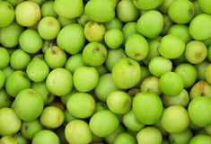 Green jujube fruit Stock Photography