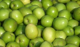 Fresh Jujube Fruits for Sale Royalty Free Stock Image