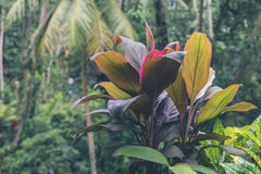Green jungle on Bali island, Indonesia. Tropical rainforest scene. Royalty Free Stock Image
