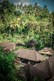 Green jungle on Bali island, Indonesia. Tropical rainforest scene. Royalty Free Stock Photography