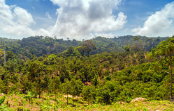 Green jungle Royalty Free Stock Image