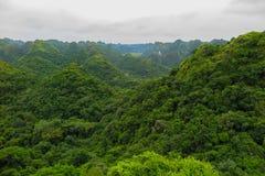 Green jungle in Cat Ba island, Vietnam. Green tropical vegetation surrounding the hills of the Cat Ba island, Ha Long Bay, Vietnam Royalty Free Stock Photography