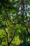 Green jungle forest Stock Images