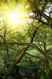Green jungle forest with ray of light. Stock Photo