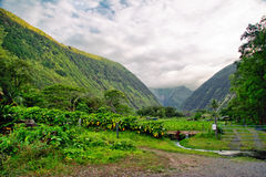 Green jungle of Hawaii Stock Image