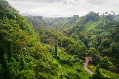 Green jungle of Hawaii stock images