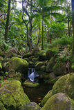 Green jungle of Hawaii. Photographed in jungle on Big island. Hawaii. USA Royalty Free Stock Image