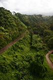 Green jungle of Hawaii Stock Photos