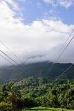 Green Jungle landscape with cables Stock Photos