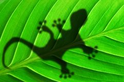 Green jungle leaf and gecko Royalty Free Stock Images